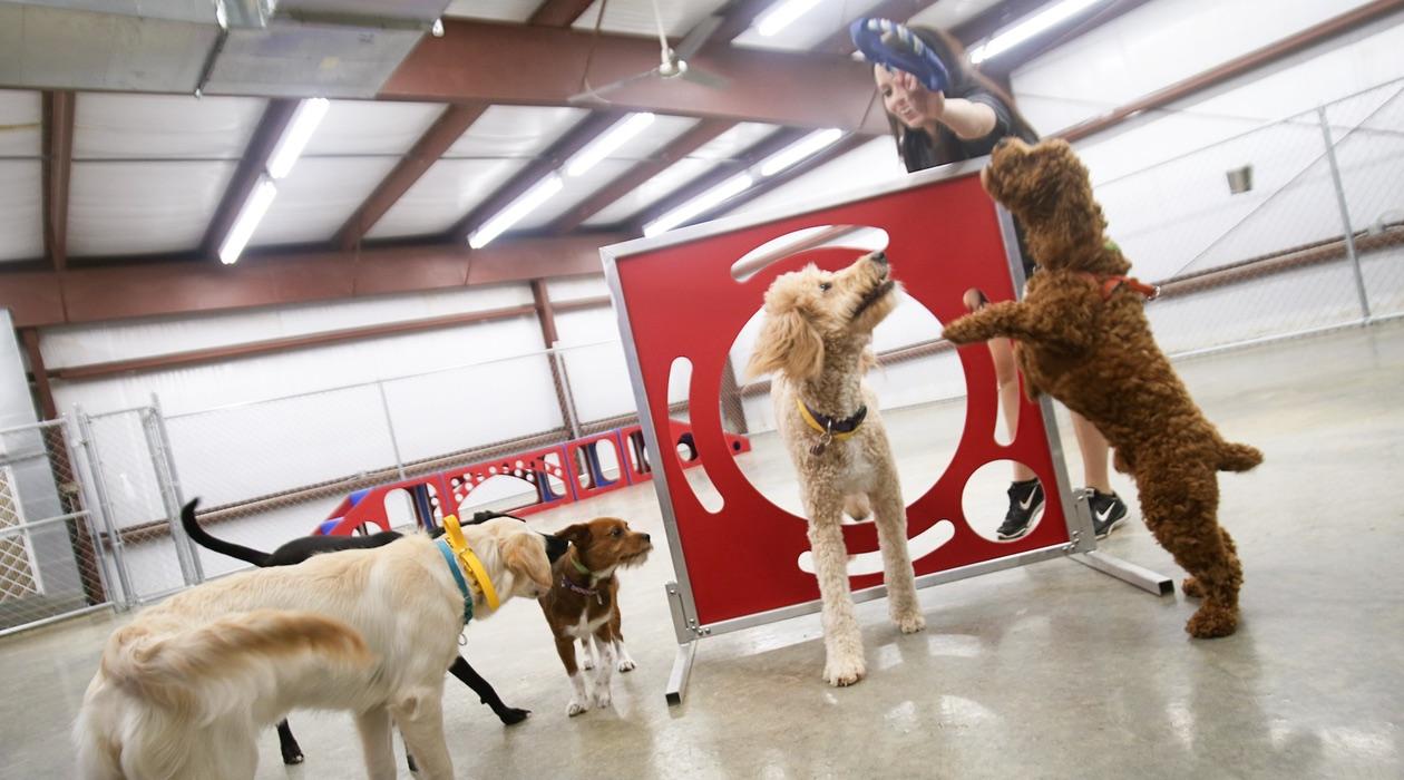 Rucker Dog Training Gainesville Ga